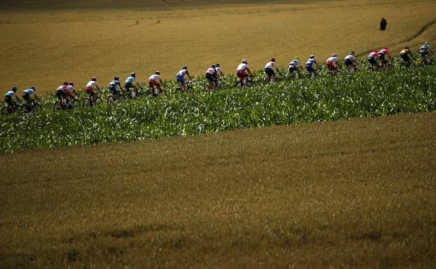 The peloton, during the present Tour de France. / EFE