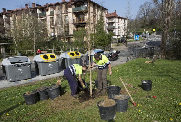 Empleados del servicio de arbolado trabajan en una zona verde de Urdanibia berri, donde se han plantado cuatro nuevos árboles. / F. DE LA HERA